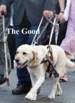 dog.good.text.2