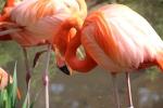 zoo.flamgo